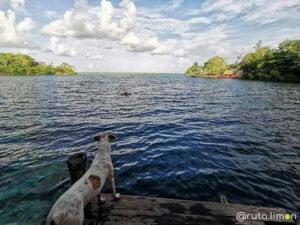 Perro en el cenote de la bruja en Bacalar Yucatan