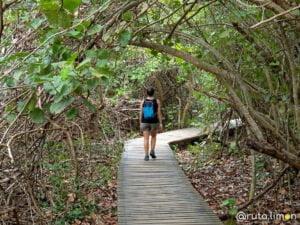 Camino del parque Tayrona desde el Zaino