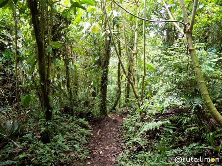 monteverde costa rica que hacer