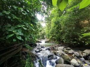 Cascada con mucha vegetacion, cascada verde en Costa Rica